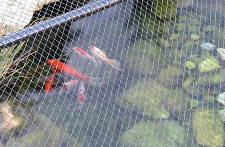 Woven pond netting keeps blowing debris out of pond for Fish pond protection
